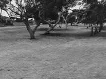 Черно-белая сцена Стоковые Изображения RF