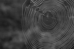 Черно-белая фотография макроса естественного Spiderweb в больших закоптелых горах Стоковые Изображения RF