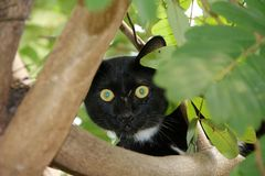 Черно-белая чернота кота цвета главным образом белые пункты мала с зелеными глазами на дереве Стоковое Изображение RF