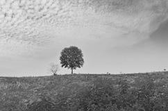 Черно-белое изображение сиротливого дерева на холме Стоковое фото RF
