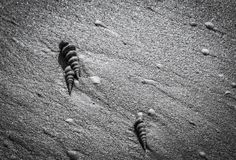 Черно-белое фото seashells на пляже Стоковые Фото