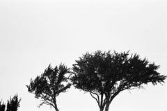 Черно-белые деревья падая вверх стоковые изображения rf