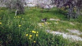 черно-белые прогулки кота на зеленой траве стоковые изображения rf