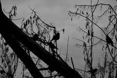 Черно-белые силуэты птицы стоковая фотография