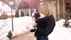 Черно-белые щенята Коллиы границы прижимаясь вверх с пребыванием девушки владельца около домашнего весеннего дня целуя обнимающ P сток-видео