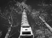 Черно-белый дом птицы смотря вверх на конспекте дерев-природ Стоковые Фото