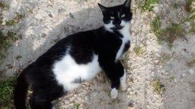 Черно-белый кот на зеленой траве стоковые изображения