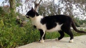 Черно-белый кот на зеленой траве стоковое изображение rf