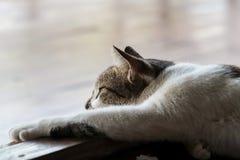 Черно-белый кот на ленивом настроении стоковые изображения rf
