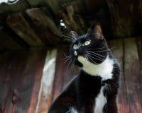Черно-белый кот на старой деревянной предпосылке дома Стоковая Фотография