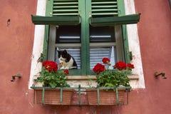 Черно-белый кот сидя на зеленым окне закрыванном годом сбора винограда стоковая фотография