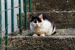 Черно-белый кот улицы стоковое фото