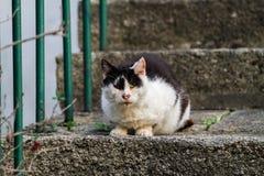 Черно-белый кот улицы стоковые фотографии rf