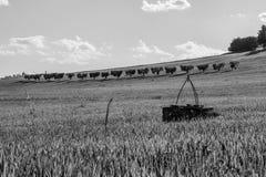 Черно-белый ландшафт сельской местности в области Марша Италии стоковая фотография rf