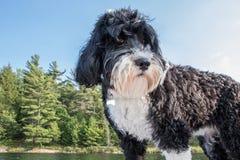 Черно-белый маячить собаки большой стоковое изображение rf
