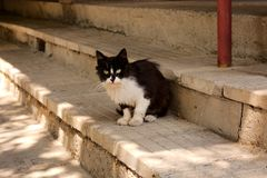 Черно-белый случайный кот сидя на лестницах стоковая фотография