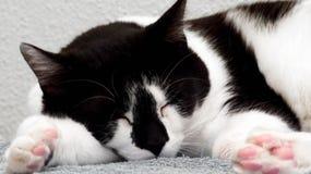 Черно-белый спать кота стоковая фотография rf