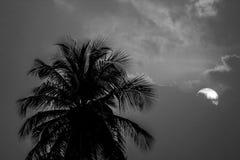 Черно-белый сумрак стоковые фото