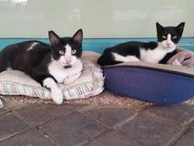 2 черно-белых кота отдыхая в улице Стоковая Фотография RF