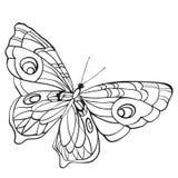 Черно-белая бабочка с открытыми крылами в взгляд сверху Стоковое фото RF