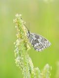 Черно-белая бабочка стоковое изображение rf