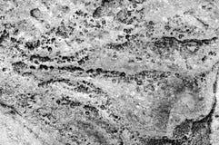 Черно-белая близкая красочная текстура текстуры камня моря Стоковая Фотография