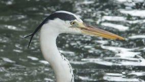 Черно-белая голова птицы Стоковая Фотография