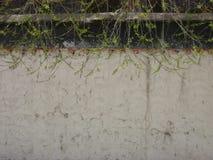 Черно-белая загородка с деревом Стоковые Изображения RF