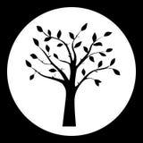 Черно-белая иллюстрация вектора силуэта дерева Стоковая Фотография RF