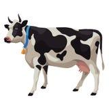 Черно-белая корова, изолированный взгляд со стороны, Стоковая Фотография