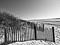 Черно-белая красота Стоковые Изображения