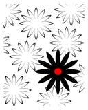 Черно-белая маргаритка Стоковое Изображение RF