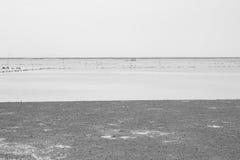 Черно-белая предпосылка моря Стоковая Фотография RF