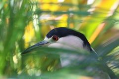 Черно-белая птица Стоковые Изображения RF