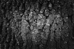 Черно-белая расшива предпосылки дерева стоковое фото