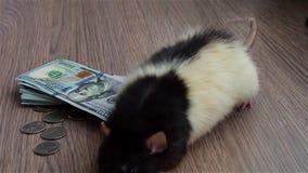 Черно-белая смешная крыса идет вокруг монеток и банкнот сток-видео