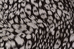 Черно-белая текстура кожи Стоковое Изображение RF