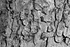 Черно-белая текстура коры дерева цвета Стоковое Изображение