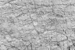Черно-белая текстура предпосылки текстуры камня моря Стоковые Изображения