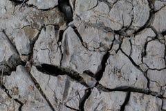 Черно-белая треснутая текстура пола Стоковые Фото