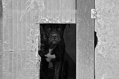 Черно-белая унылая собака потревожилась глаза Стоковое Изображение RF