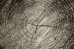 Черно-белое изображение старой текстуры ствола дерева против предпосылки голубые облака field wispy неба природы зеленого цвета т Стоковое Фото