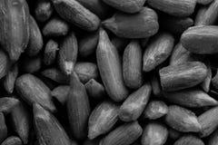 Черно-белое изображение текстуры предпосылки семян подсолнуха Стоковое Изображение RF