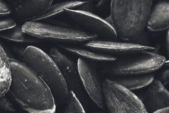 Черно-белое изображение текстуры предпосылки семян тыквы Стоковое Фото