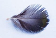 Черно-белое перо белизна пера предпосылки черная Стоковое Изображение RF