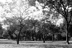 Черно-белое поле травы в большом парке города Стоковая Фотография