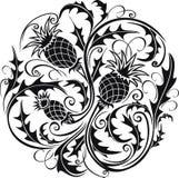 Черно-белое стилизованное изображение вектора thistle Стоковое Фото