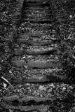 Черно-белые лестницы Стоковое фото RF