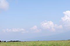 Черно-белые коровы в ферме и красивом взгляде ландшафта  Стоковая Фотография