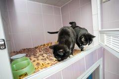 Черно-белые котята в приюте для животных стоковые изображения